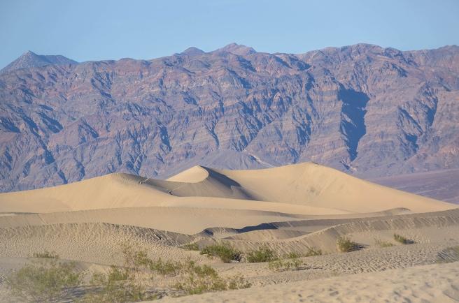 Mesquite sand dunes lowres